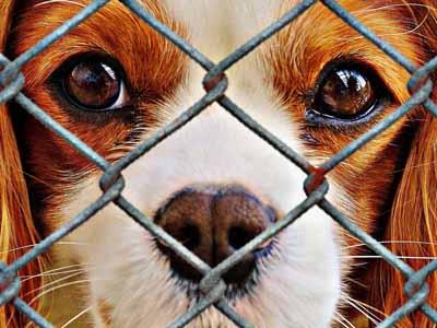 Animal Shelter date idea